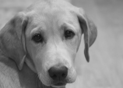 taney-place-puppy-2