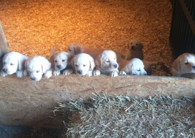 2015 Litter of Puppies